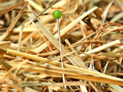 Manchmal suchen Menschen die Nadel im Heuhaufen. Foto:Pixabay