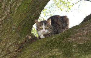 Bis zum 10. November dauert die Herbstkampagne zur Kastration von Katzen im Kreis Düren. Foto: Kreis Düren