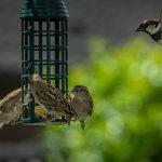 Vogel Vögel Meis Futter